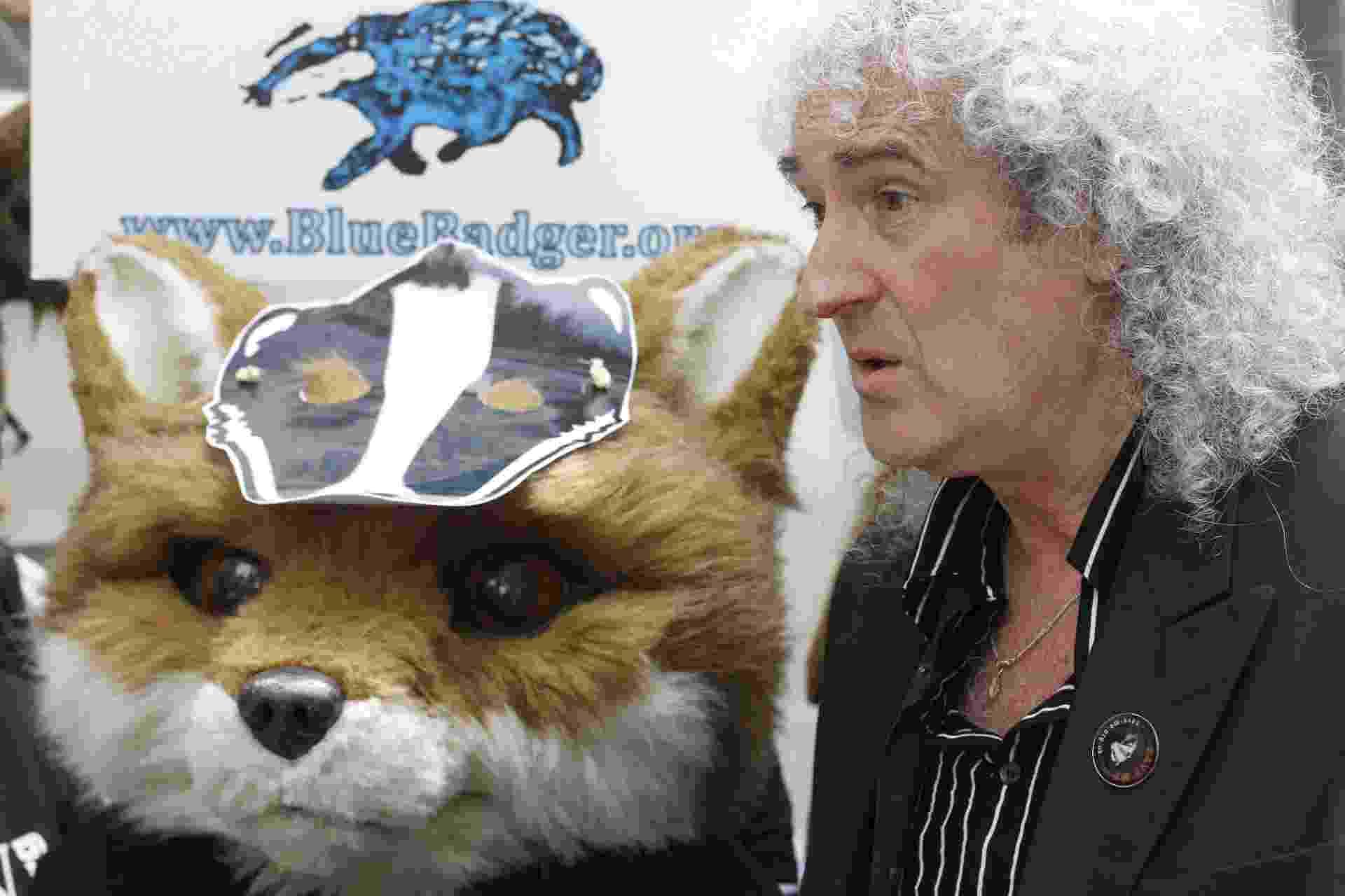 3.jun.2013 - Brian May lidera protesto contra a matança de texugos na Inglaterra em frente a órgão ambiental do governo britânico em Londres, neste sábado (1º). O guitarrista da banda Queen - e também doutor em astrofísica - criou o Team Badger (Grupo dos Texugos, em tradução livre) para impedir que fazendeiros ingleses exterminem os animais apontados como transmissores da tuberculose bovina no país - Tal Cohen/EPA/Efe