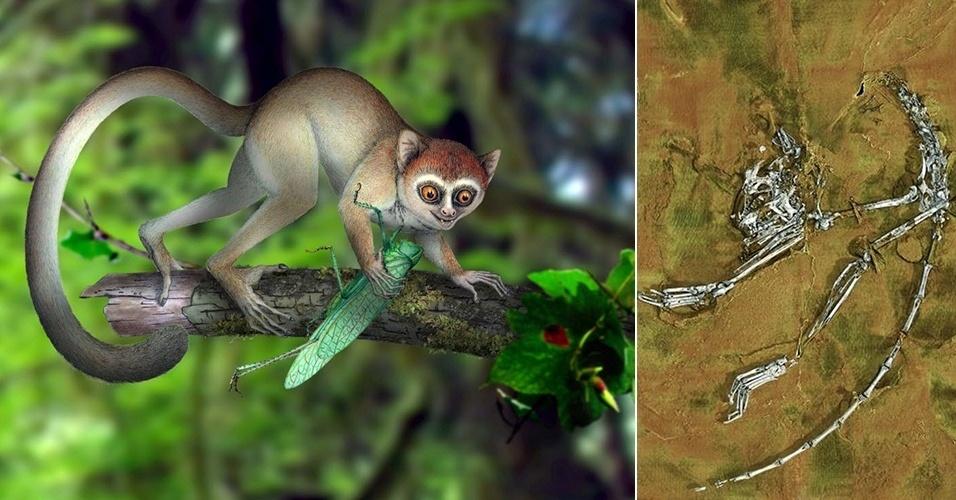 5.jun.2013 - Restos fossilizados de 55 milhões de anos achados na China (à direita) revelaram ser do primata mais antigo já conhecido pelo homem. De acordo com o paleontólogo Xijun Ni, da Academia Chinesa de Ciências em Pequim, o