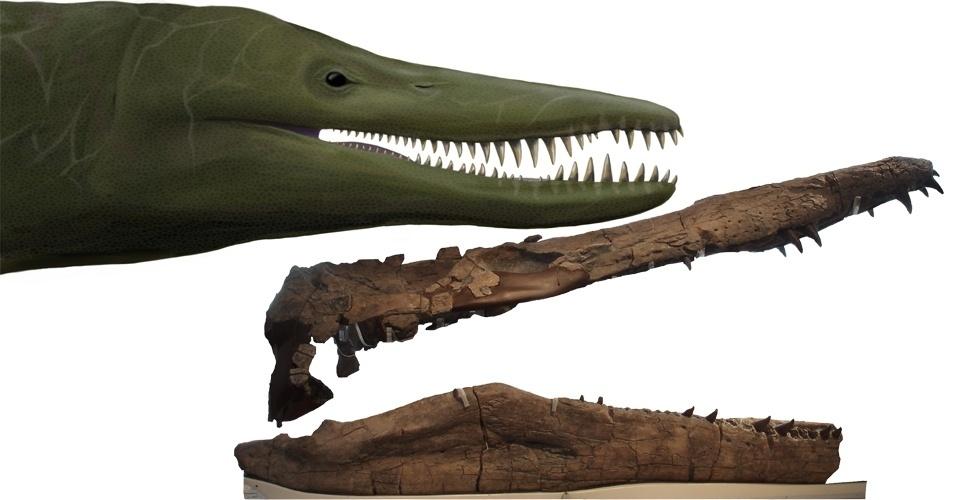 5.jun.2013 - Um aposentado descobriu um crânio de cerca de dois metros de um pliossauro, um répteis marinho pré-histórico gigante, na Inglaterra. Chamado de