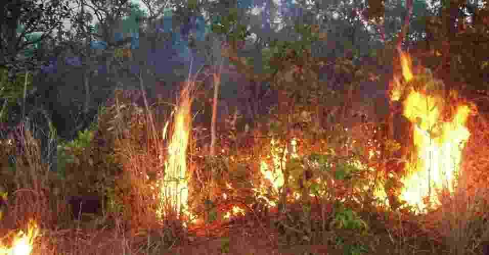 """10.jun.2013 - Incêndios na vegetação rasteira - e que ficam """"escondidos"""" dos satélites pela copas das árvores - queimaram mais de 85 mil km2 da Amazônia entre 1999 e 2010, mostra estudo de Doug Morton, cientista da Nasa (Agência Espacial Norte-Americana) - Doug Morton"""