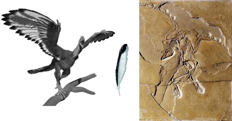 12.jun.2013 - Paleontólogos da Universidade de Manchester, no Reino Unido, descobriram que o