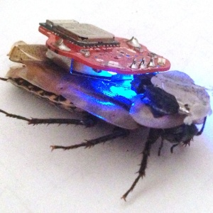 "A barata ""ciborgue"" é controlada por meio de dispositivos eletrônicos, como celulares - Backyard Brains"