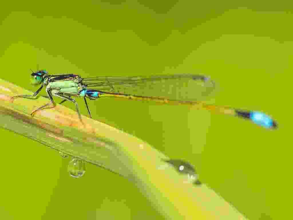18.jun.2013 - Junho - Pesticidas que vão parar na água estão diminuindo a diversidade de insetos, mostram estudos feitos na Alemanha, na França e na Austrália. A riqueza de espécies de invertebrados que vivem às margens de rios e córregos caiu 42% na Europa e 27% na Austrália - André Künzelmann/UFZ
