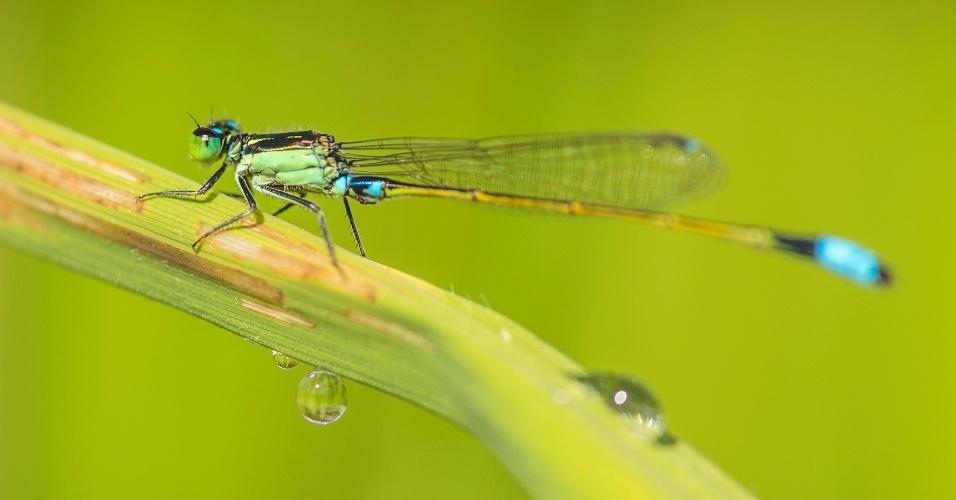 18.jun.2013 - Junho - Pesticidas que vão parar na água estão diminuindo a diversidade de insetos, mostram estudos feitos na Alemanha, na França e na Austrália. A riqueza de espécies de invertebrados que vivem às margens de rios e córregos caiu 42% na Europa e 27% na Austrália