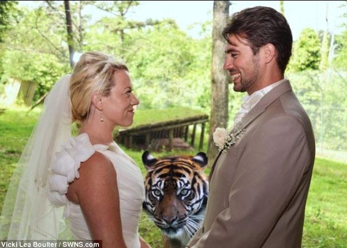 A tigresa Banda ''invadiu'' a foto dos recém casados Andrew, 25, e Karma Madgwick, 30, que fizeram a festa de casamento no zoológico Paignton Zoo, em Devon (Reino Unido). O site ''Daily Mail'', que divulgou a foto, explica que o animal estava atrás de um vidro e, por isso, sua participação na foto não colocou o casal em risco