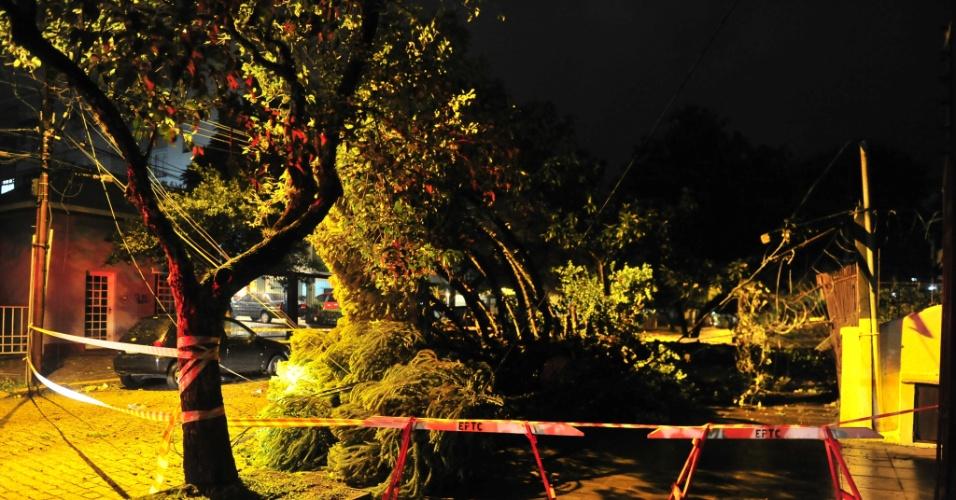 22.jan.2013 - Fortes ventos derrubaram árvores e deixaram milhares de pessoas sem energia elétrica entre a noite desta sexta-feira (21) e o início da madrugada deste sábado em Porto Alegre e região metropolitana. A estimativa da CEEE (Companhia Estadual de Energia Elétrica) é que 10 mil estivessem sem energia às 2h