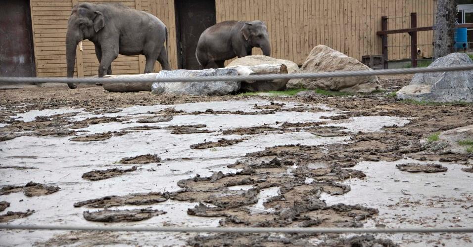 25.jun.2013 - Zoológico em Calgary, no Canadá, foi atingido pelas inundações. Elefantes ainda passeiam pelo local cheio de lama e entulho