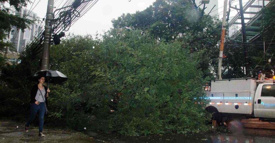 26.jun.2013 - A queda de uma árvore de grande porte bloqueou, na manhã desta quarta-feira, a rua Funchal próximo à avenida Chedid Jafet, na zona oeste de São Paulo. A chuva que atinge a cidade desde ontem causou alagamentos, apagou semáforos e provocou a queda de duas árvores