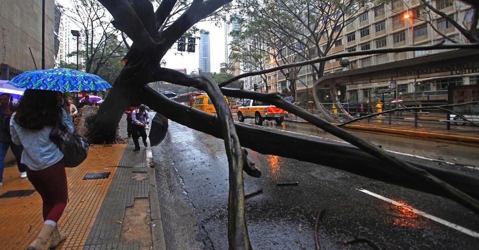 26.jun.2013 - A queda de uma árvore sobre ponto de ônibus na avenida Nove de Julho, em São Paulo, nesta quarta-feira prejuficou quem passava pelo local. Ninguém ficou ferido