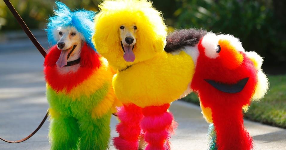 28.jun.2013 - A  tosadora de cães Catherine Opson ficou famosa e conquistou vários prêmios com tosas diferentes e criativas em cães, nos EUA. Os modelos animais incluem não só cores inusitadas mas desenhos de personagens famosos como os do programa Vila Sésamo
