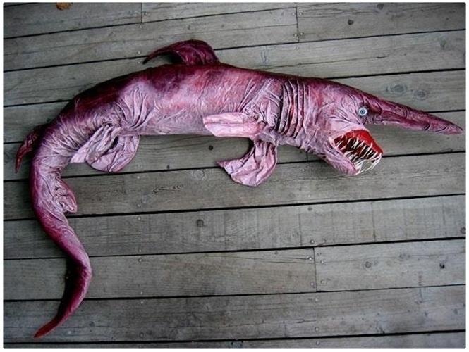 5.jul.2013 - O tubarão-gnomo (Mitsukurina owstoni) é uma espécie de tubarão só encontrada nas profundezas do oceano. Tem longo focinho em forma de faca e uma grande boca com dentes em forma de agulha. Tem o corpo plano,  olhos pequenos, sem pálpebras, corpo flácido rosa-claro com barbatanas azuladas, tornando-se cinza amarronzado após a morte. Costuma ter 3 metros de comprimento, mas pode chegar aos 6m e ocorre no litoral norte da América do Sul, África e Europa. O focinho contém órgãos sensoriais para detectar sinais elétricos emitidos por presas, como polvos e caranguejos
