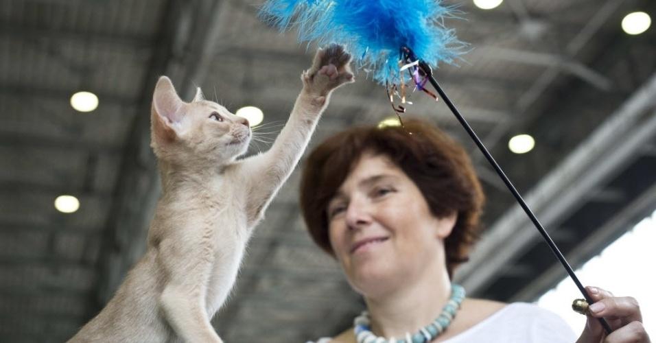 6.jul.2013 - Gato brinca durante exposição de animais em Moscou, na Rússia, neste sábado (6)