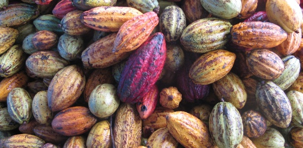 Cacau de fazenda de Ilhéus (BA); para ser considerado chocolate, produto precisa ter ao menos 25% do fruto - Armando Pereira Filho/UOL