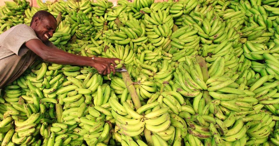 11.jul.2013 - Um professor de genética da Universidade College de Londres, na Inglaterra, descobriu que as pessoas têm metade do DNA de uma banana. Para chegar ao resultado, Steve Jones decifrou o genoma da fruta tropical e o comparou com a base de dados do Projeto Genoma Humano, que mapeou todos os genes do corpo humano