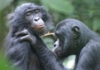 Caroline Deimel, LuiKotale Bonobo Project