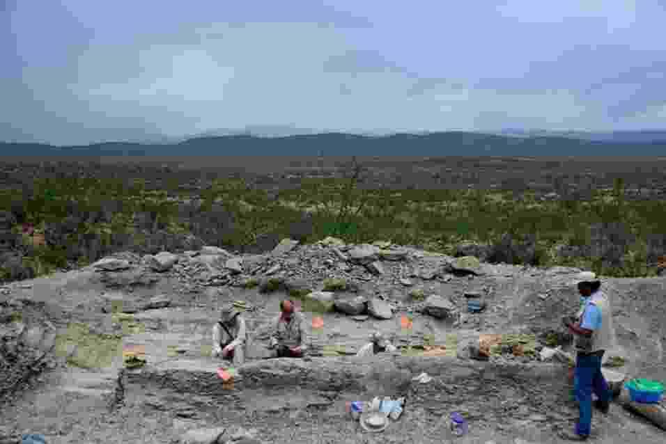23.jul.2013 - Arqueólogos recuperaram 50 vértebras da única cauda articulada de um dinossauro descoberta no México. Os restos pertencem a um hadrossauro de 72 milhões de anos e somam cinco metros, quase a metade do comprimento do herbívoro. Os ossos foram encontrados em 2005 em uma jazida de Coahuila, mas só começaram a ser escavados  no último dia 2 de julho, segundo o Instituto Nacional de Antropologia e História do México - Mauricio Marat/Inah
