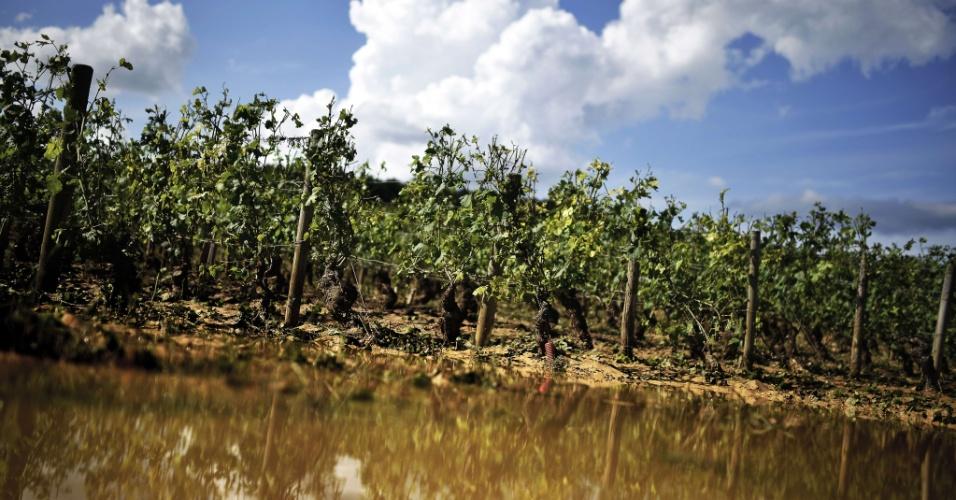 24.jul.2013 - Fortes chuvas atingiram a região da Borgonha, na França, e destruíram quase 70% das plantações de uva. O local é famoso por ser um dos maiores produtores produtores de vinho