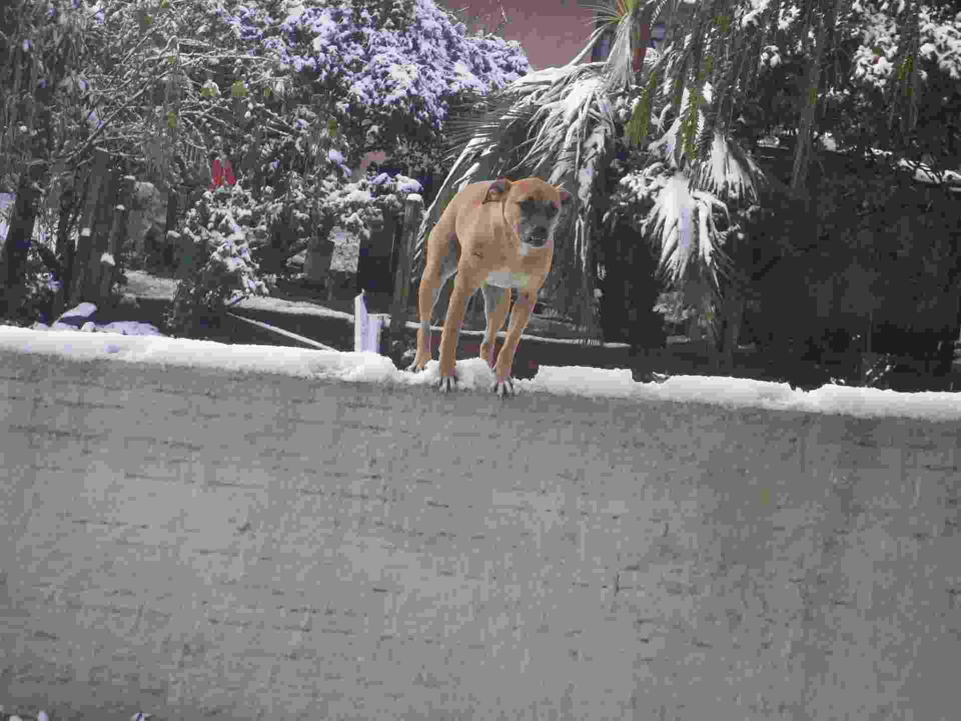 26.jul.2013 - A internauta Jéssica Seredniski Melnek mostra como ficou a paisagem de Papanduva (SC), onde nevou dia 23 de julho - Jéssica Seredniski Melnek/Você Manda/UOL