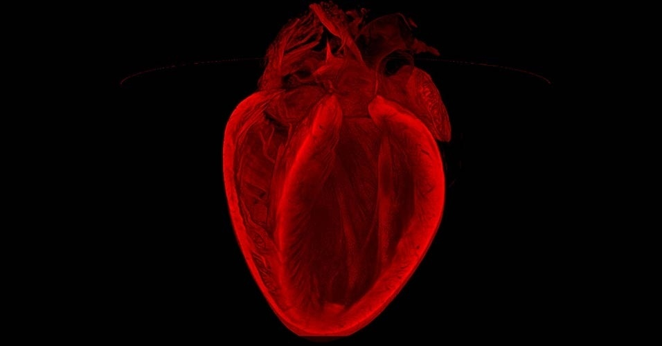 Concurso premia imagens surpreendentes do fundo do coração