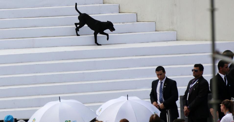 28.jul.2013 - Cachorro desce escadas do altar onde o papa Francisco celebra missa de encerramento da JMJ (Jornada Mundial da Juventude), na praia de Copacabana, no Rio de Janeiro