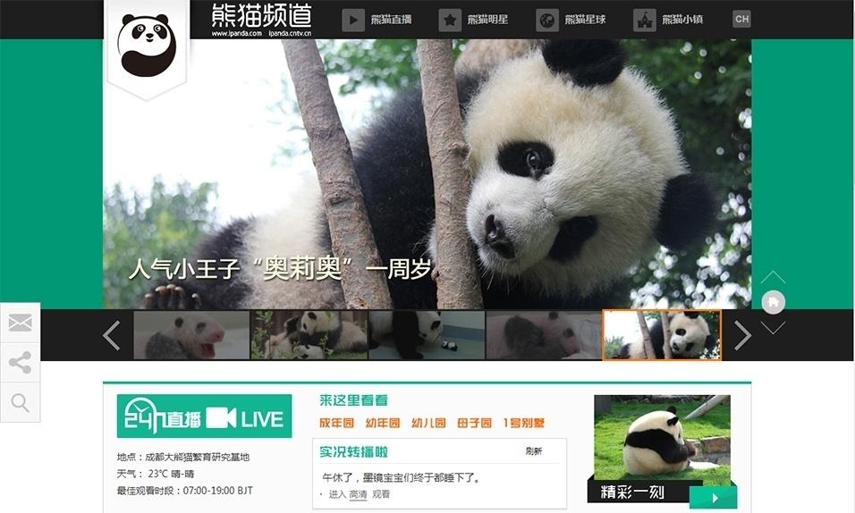 29.jul.2013 - A partir de agosto, o mundo poderá acompanhar a rotina dos mais de 80 pandas gigantes que vivem Base de Pesquisas e Criação do Panda Gigante de Chengdu, na província de Sichuan, na China. O Canal Panda Gigante terá 28 câmeras de alta definição para fazer a transmissão pela internet - os internautas poderão escolher seis temas, entre elas creche e mãe e filho