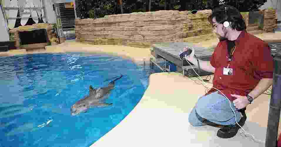 5.ago.2013 - Jason Bruck, pesquisador da Universidade de Chicago (EUA), grava sons de um golfinho no jardim zoológico de Brookfield, perto de Chicago, nos Estados Unidos. Sua pesquisa indica que os golfinhos têm a mais longa memória social já registrada entre o mundo animal, ficando atrás apenas dos seres humanos - Jim Schulz/Chicago Zoological Society