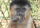 Divulgação/Associação de Proteção de Animais Silvestres de Assis