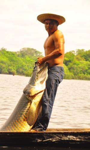 Na pesca sustentável, feita pelo instituto amazônico, só é permitido retirar 30% dos pirarucus adultos contados no levantamento feitos todos os anos de estoques de peixes, para que não se corra o risco de sobrepesca