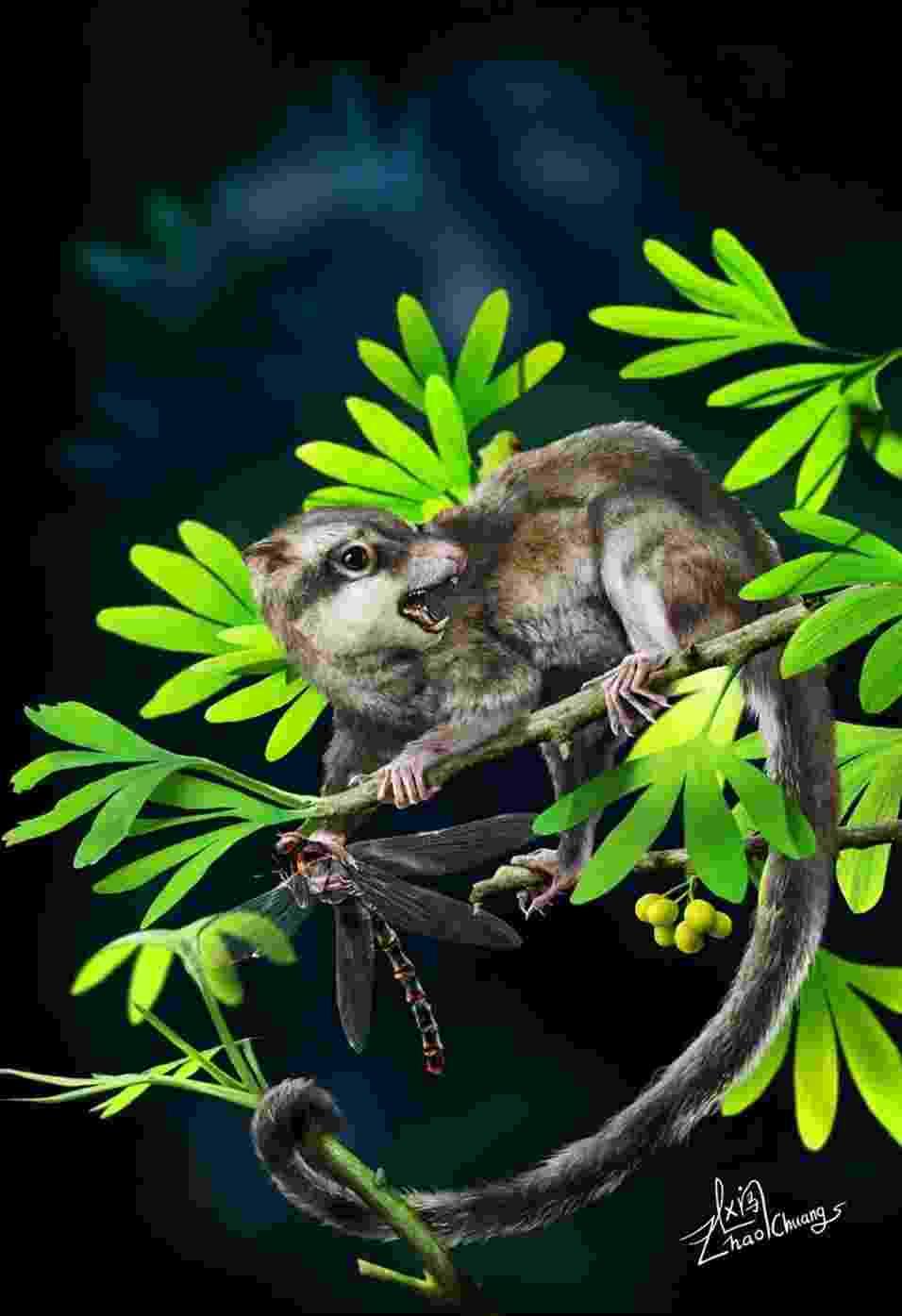"""7.ago.2013 - O time liderado pelo chinês Jin Meng apresentou um animal da ordem Haramiyida que foi batizado de """"Arboroharamiya"""", em função de ser adaptado a viver nas árvores. Após analisar o fóssil, o grupo concluiu que as características do esqueleto apoiavam a ideia de sua relação com os multituberculados, uma ordem de mamíferos roedores, situando a origem dos mamíferos entre 40 e 50 milhões de anos antes do que se pensava até agora. A descrição do animal pré-histórico foi publicada na revista Nature, em paralelo com a do """"Megaconus"""", que viveu há cerca de 165 milhões de anos na China, e também reforça a tese da evolução antecipada dos mamíferos - Zhao Chuang/Jin Meng et al."""