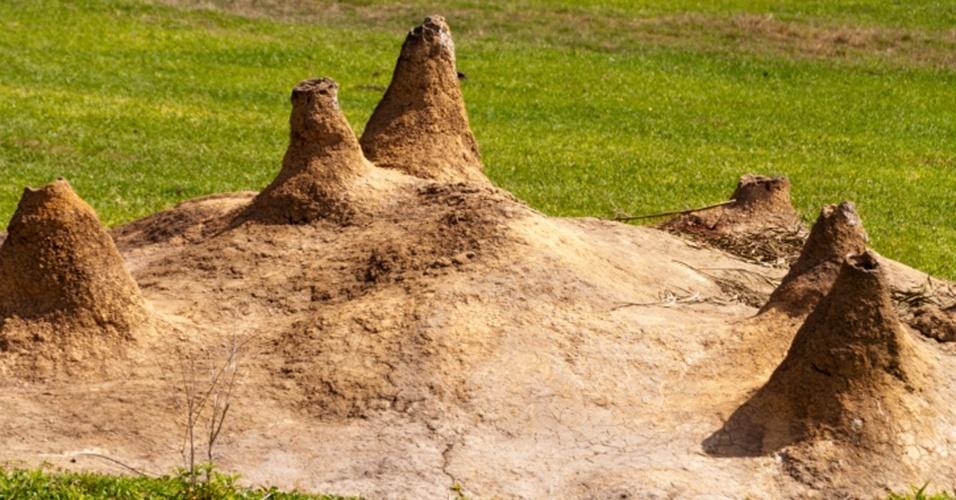 8.ago.2013 - Cupins africanos protegem a colônia dos predadores dando cerca de 11 cabeçadas por segundo, o que faz o som viajae a 1,3 metro por segundo