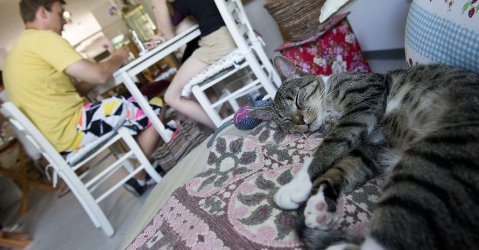 8.ago.2013 - Gata dorme em poltrona em cafeteria de Berlim, na Alemanha. Nesta quinta-feira (8), é comemorado o Dia Mundial do Gato