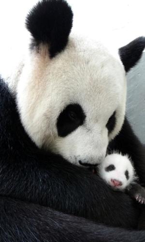 13.ago.2013 - A panda gigante Yuan Yuan abraça seu filhote no zoológico de Taipé, em Taiwan, em foto divulgada nesta terça-feira (13). O bebê panda nasceu em 6 de julho