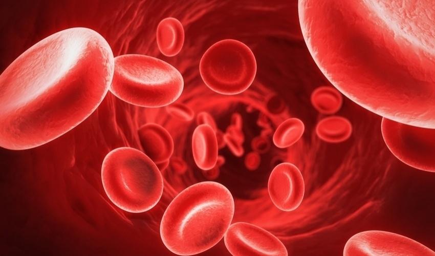 Resultado de imagem para hemolise