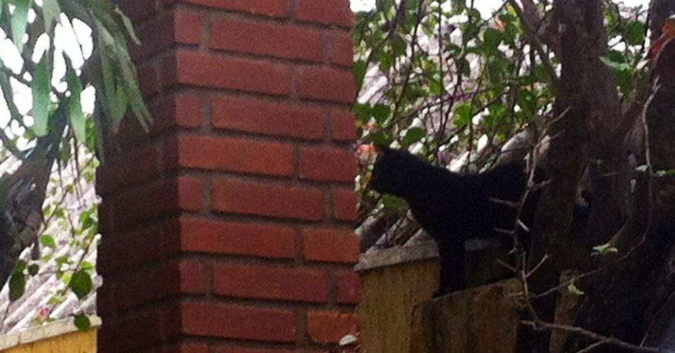 14.ago.2013 - Um dos gatos da avó de Marcelo, Berenice Oliveira, morta durante a chacina, está abandonado e mora na casa dela, segundo vizinhos