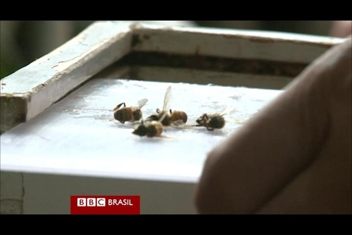 O tratamento com picadas de abelhas seria usado na China há milhares de anos, mas só foi reconhecido pelas autoridades que regulam a medicina tracional do país há cinco anos