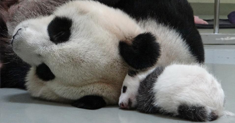 16.ago.2013 - Panda gigante Yuan Yuan dorme ao lado do filhote, nascido em 6 de julho, no zoológico de Taipei, em Taiwan