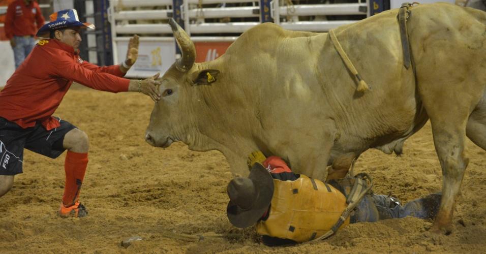 21.ago.2013 - Homem coloca a mão na cabeça de touro durante a 58ª Festa do Peão de Boiadeiro de Barretos, em São Paulo