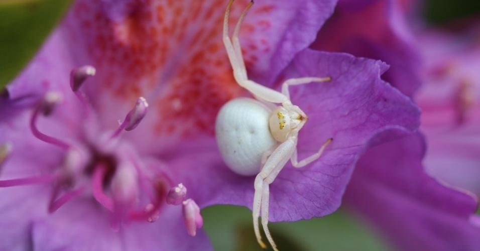 26.ago.2013 - Gavin Ballantyne foi o vencedor na categoria Ecossistemas e Comunidades, com a foto de uma aranha em uma flor de rododendro, em Dorset, no Reino Unido