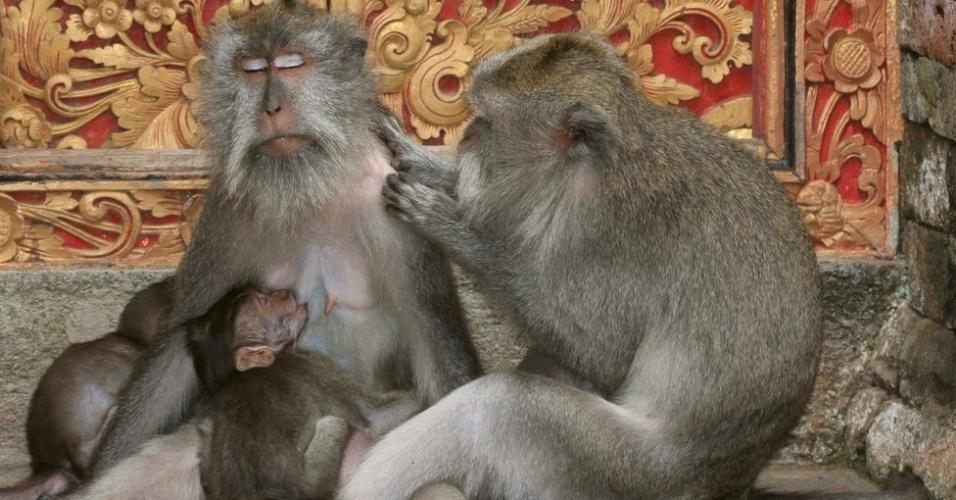 26.ago.2013 - Silviu Petrovan competiu na categoria Ecologia e Sociedade com esta imagem de macacos relaxando na Floresta Sagrada dos Macacos em Ubud, Bali