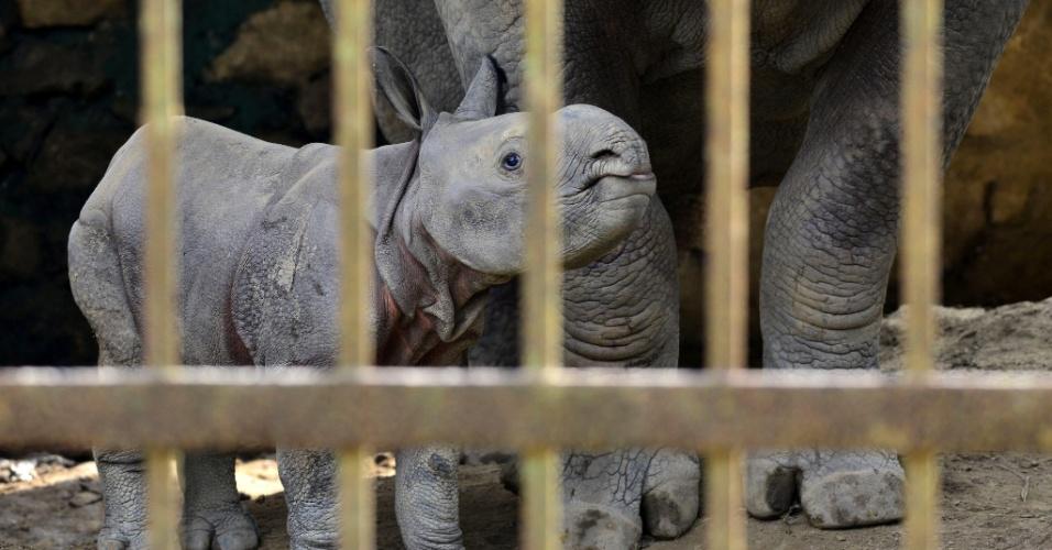 2.set.2013 - Filhote de rinoceronte fica perto da mãe no zoológico de Guwahati, na Índia, nesta segunda-feira (2)