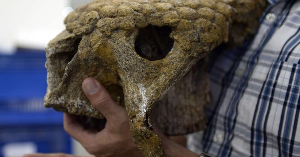 2.set.2013 - O paleontólogo Ascanio Rincón exibe o crânio de um gliptodonte encontrado na Venezuela, que tem 102 sítios com fósseis de animais pré-históricos. As prospecções de petróleo têm sido fundamentais para aumentar o acervo do país, pois as grandes poças de petróleo com água na superfície preservam exemplares por milhões de anos. Agora, a equipe de Rincón quer encontrar um fóssil humano na região