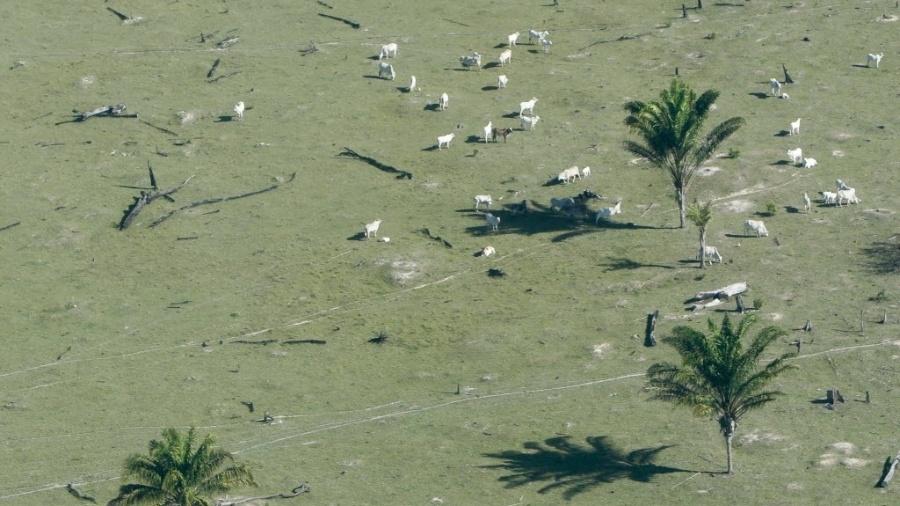 Maior parte das áreas desmatadas na floresta amazônica é ocupada por pastagens, segundo dados da ONU - Fernando Bizerra Jr/Efe