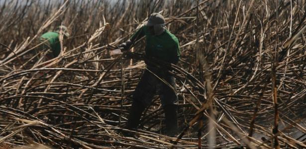 Produção de cana de açúcar na região Sudeste - Silva Junior/Folhapress