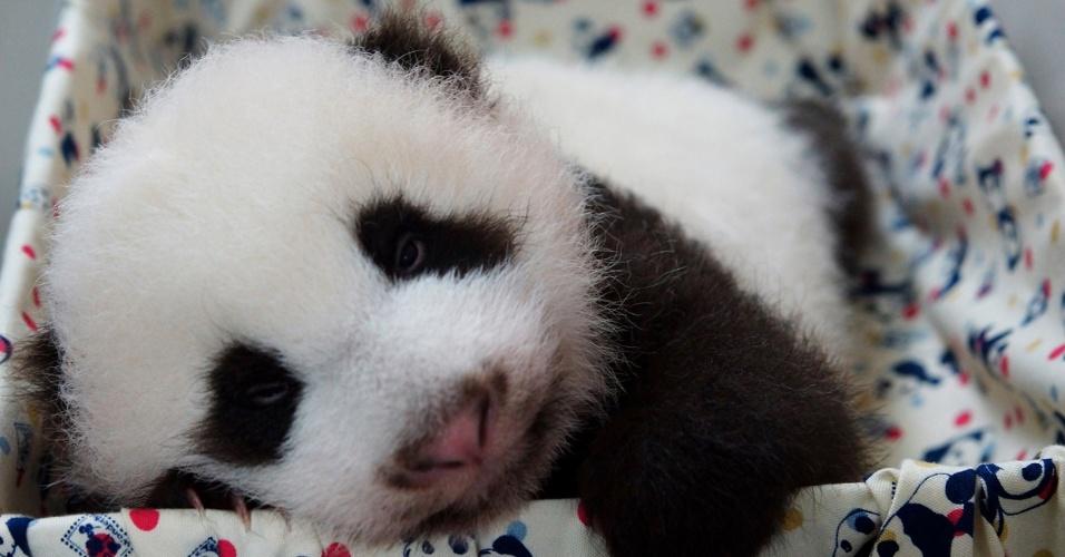 8.set.2013 - Filhote de panda nascido por inseminação artificial 'descansa' no zoológico de Taipei (Taiwan)