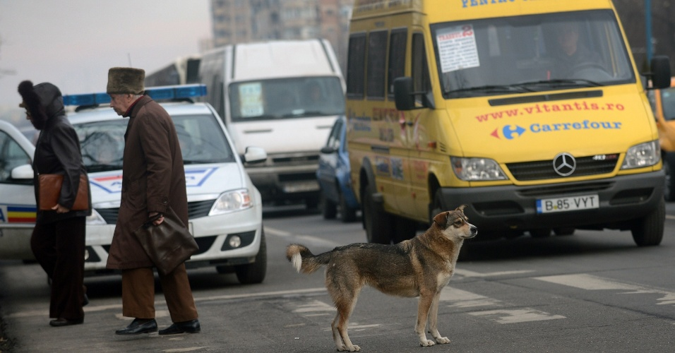 10.set.2013 - Cachorro atravessa rua movimentada de Bucareste, na Romênia. O Congresso do país aprovou uma lei que autoriza a eutanásia para cães de rua que não tenham sido reclamados por seus donos num período de 14 dias a partir de sua captura, uma decisão muito criticada por defensores dos animais