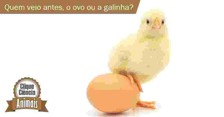 9.9.2013 - Clique Ciência: Quem veio primeiro, o ovo ou a galinha? - ThinkStock/UOL