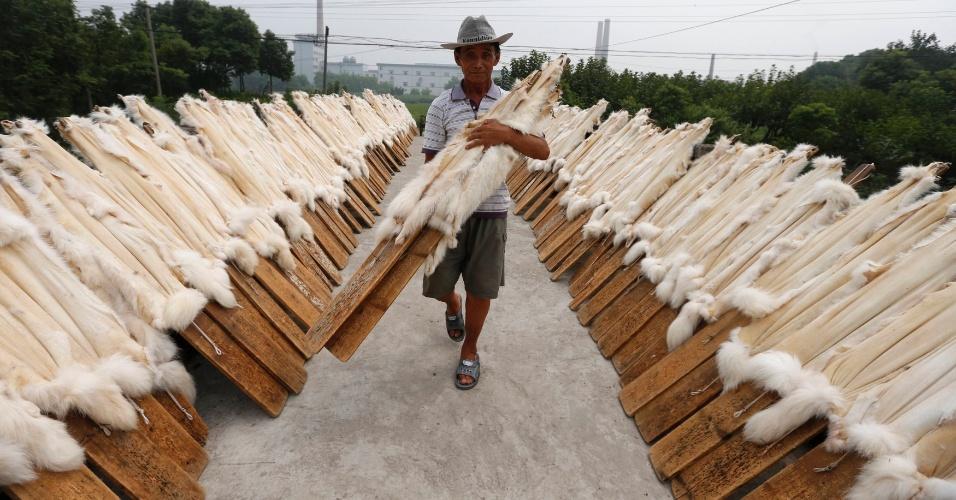 13.set.2013 - Um trabalhador carrega pranchas de madeira com pele de cão-guaxinim para secar em uma oficina de peles na cidade Chongfu, província de Zhejiang, na China, nesta sexta-feira (13). O município é conhecido como o maior exportador de peles do país, com 1.469 empresas, de acordo com o site do governo