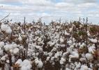 Índice do BC aponta alta anual de 19,39% no preço de produtos agrícolas - Mauro Zafalon/Folhapress