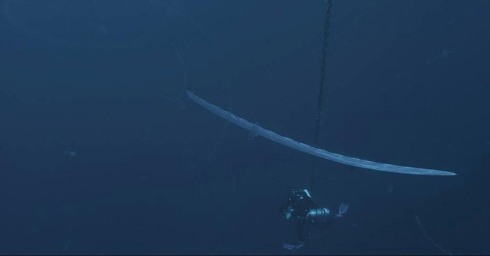 """17.set.2013 - O peixe-remo (""""Regalecus glesne"""") virou símbolo da luta contra a pesca de arrasto nas profundezas do mar em nova campanha da """"Deep Sea Conservation Coalition"""", aliança que abrange mais de 70 associações conservacionistas. Ele é o peixe ósseo mais comprido do mundo, podendo ter até 11 metros de comprimento e mais de 250 quilos. Ele é visto raramente pelas pessoas, mas é uma vítima das redes de pesca arrastadas no fundo do mar, que causam danos aos corais, às esponjas e à microflora, vitais para o ecossistema"""