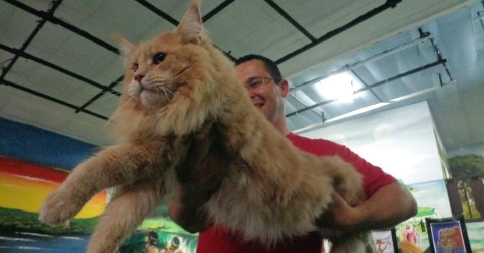 22.set.2013 - Com 1,05 metro, Villara Lorenzo é escolhido em São Vicente (SP) o maior gato do Brasil